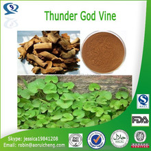 100% natural thunder god vine / Tripterygium wilfordii extract Triptolide