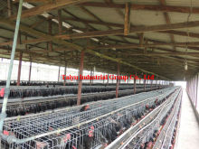 TAIYU Anti-corrosive Cages Laying Hens (Welcome to Talk With Our Local Agents)
