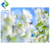 3.2mWx2.1mH per piece Flowers Butterfly pvc ceiling and wall panel