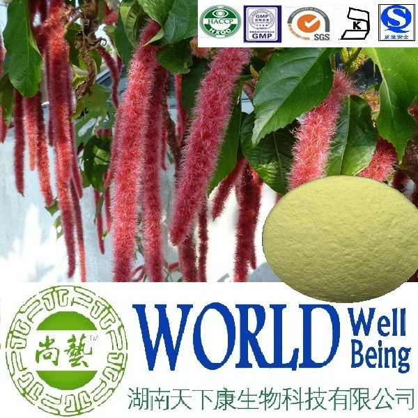 Hot sale Amaranthus caudatus extract /Ratio 10:1 20:1/Good for indigestion factory supply