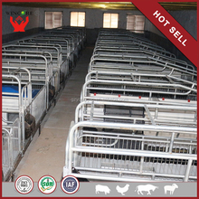 pig farm in india Farrowing crates for sale