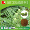 jerusalem artichoke extract powder cynarine