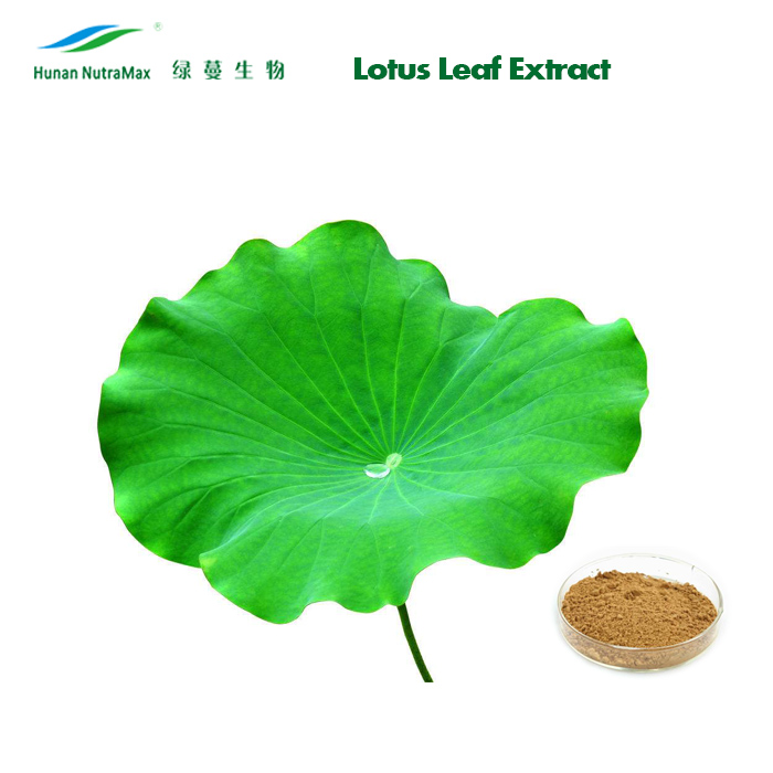 Lotus Leaf Extract, Lotus Leaves Extract, Folium Nelumbinis Extract