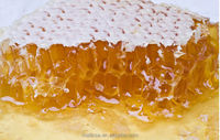 100% Nature Honey Comb Sale