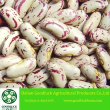 New Crop Dry Red Spotted Beans