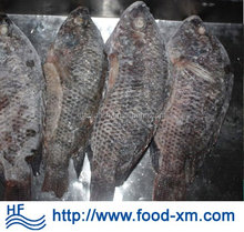 sell live tilapia fish from hhf