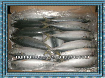 300-500g frozen mackerel from zhejiang