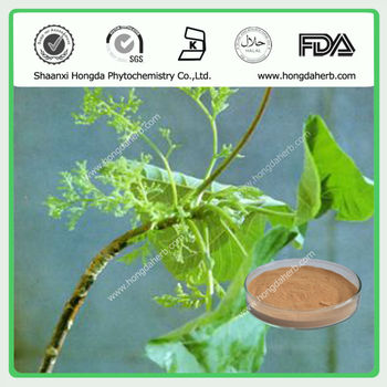 Factory Supply Natural Nettle Plant Extract