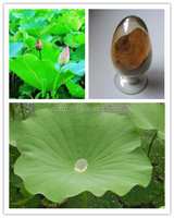 High quality pure natural lotus leaf extract powder with compeitive price