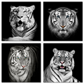 "Animal Picture Canvas Print HD Tiger Photo Canvas Wall Art Ready to Hang Room Decoration(12""x12""x4Pcs)"
