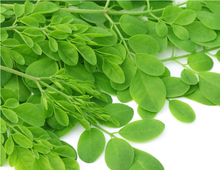 Good quality cheap moringa powder juice