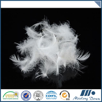 Best Price Superior Quality Duck Feather