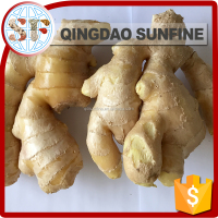 Hot sale USA CA Fresh ginger air dry fresh ginger chinese fresh ginger price