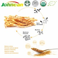 High Quality Organic Health Care Product Cordyceps