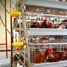 High Quality Chicken Farm Layer Cage For Sale In Zimbabwe