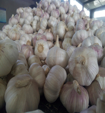 China peeled normal white Garlic price , Yelin brand 2017 fresh garlic ,whole year supply
