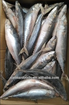300-500 Frozen mackerel whole round