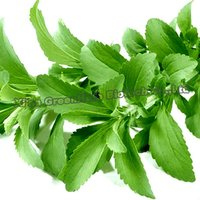 Extraction Stevia herb / Stevioside HPLC