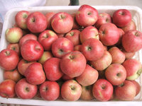 Red star apple fruit from China for sales