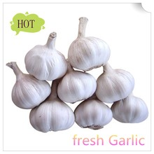 2015 new fresh garlic fron Chinese farm