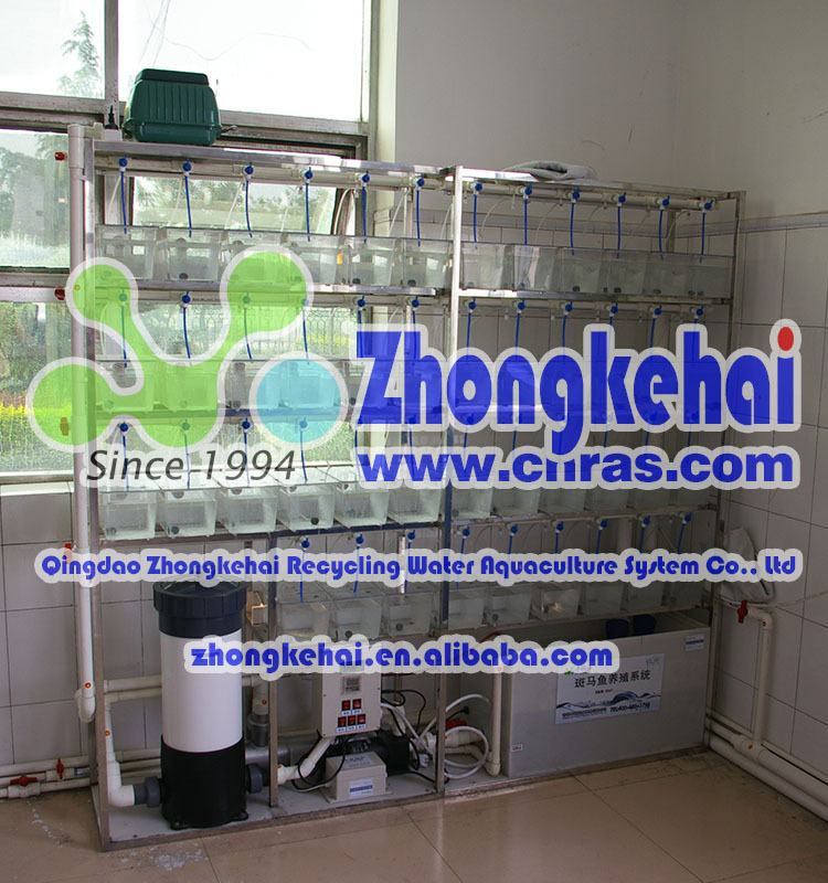 Ocean water circulation zebra fish feeding system