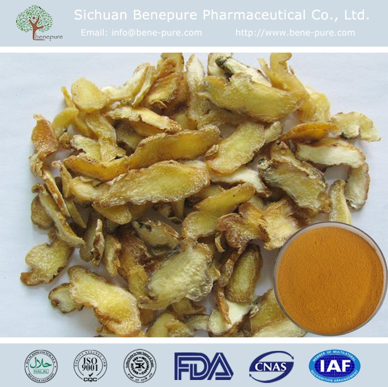 High Quality Polygonatum Sibiricum P.E. Rhizoma Polygonati P.E. Solomon's Seal P.E.