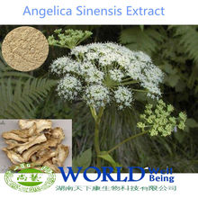 Hot Sell 100% Natural Chinese Angelica Sinensis Extract 1% Ligustilide/Gong Quai Extract/Angelica Extract