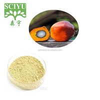 High Quality 100% Pure Natural Palm powder