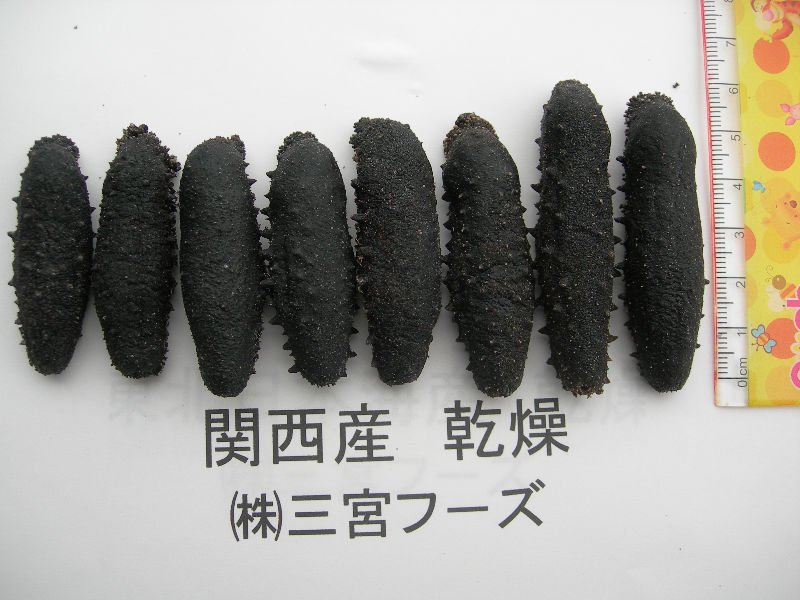 Kansai dried seacucumber
