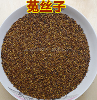 Herbal sex powder Semen Cuscutae Extract/Dodder Seed extract