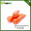 Fresh Carrots For Sale for Exporting