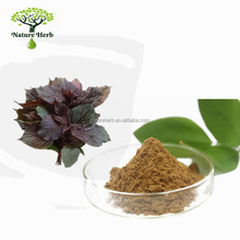 Organic Water Soluble Extract Dried Perilla Leaf Powder