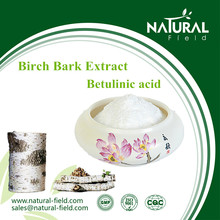 12 years manufacturer 98% birch betulinic acid white birch bark extract powder