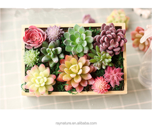 We export indoor plastic tiny mini types of artificial succulent plants