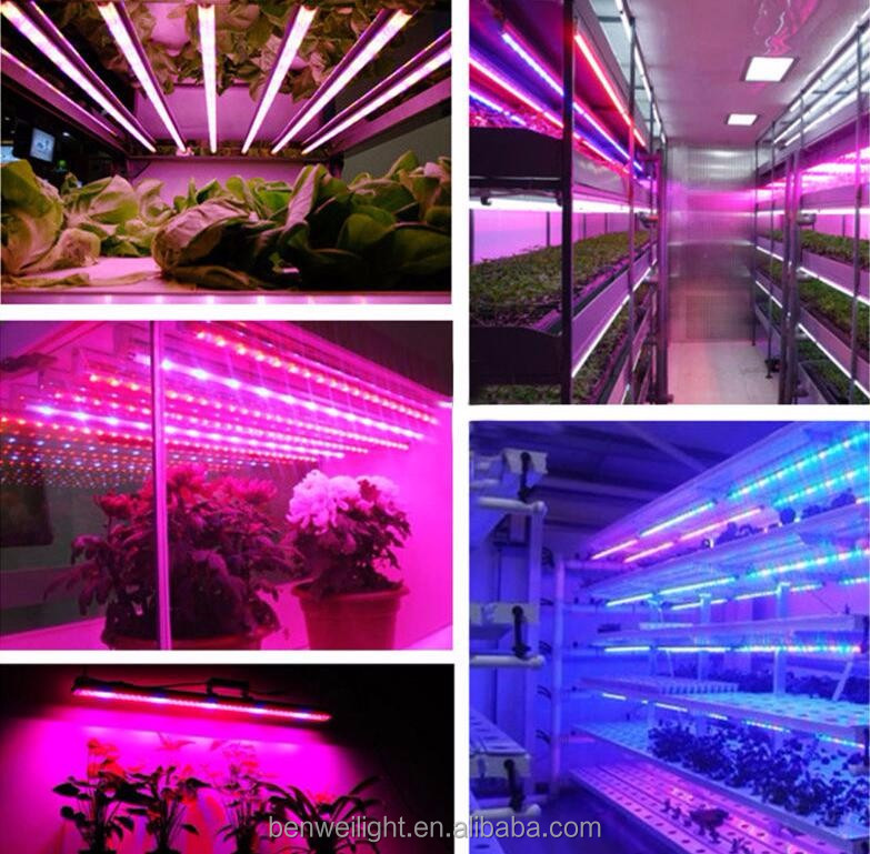 2700K - 6500K Full Spectrum T8 led plant grow light tube with 40w in blue color