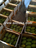 pakistani mangoes Exporter pakistani vegetables exporter
