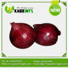 New Technology Fresh Shallot Onion