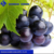 Import agent of American black grape with much experience import fruit