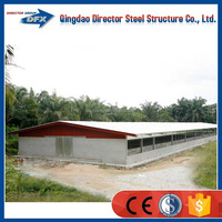 China steel frame farm equipment poultry shed chicken house building