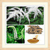 black cohosh root p.e./black cohosh extract 2.5%/powder black cohosh extract