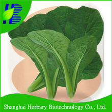 2017 Latest green vegetable pak choi seeds for growing