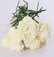 Wide varieties smiling face carnation flowers; with low price and fast shipping from kunming