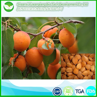 high quality 100% pure apricot kernel oil/apricot seed oil for sale