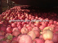 apple fruits wholesale price
