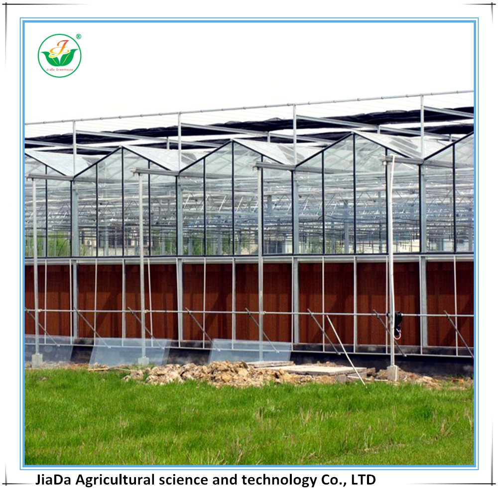 Venlo style Multi-span Glass Green house used in Agriculture