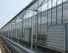 Venlo Type Multi Span Glass Agriculture Greenhouse