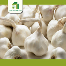 Brand new wholesale garlic for wholesales