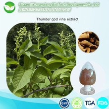 Tripterygium wilfordii Lei Gong Teng Thunder God Vine Extract