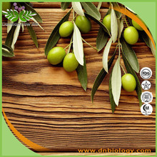 High quality Olive leaf extract/olive oil/Olive leaf powder