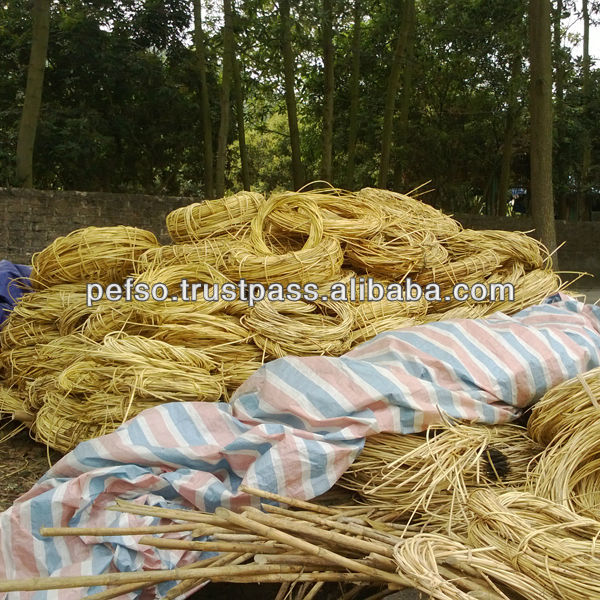 Growing Rattan furniture raw material